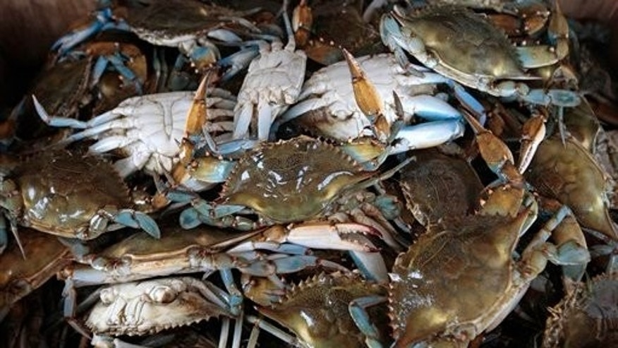 July 15: Freshly sorted blue crabs sit in a box in Hopedale, La. Researchers wondering how badly the Gulf of Mexico will suffer from the oil spill are paying close attention to the blue crab. (AP)