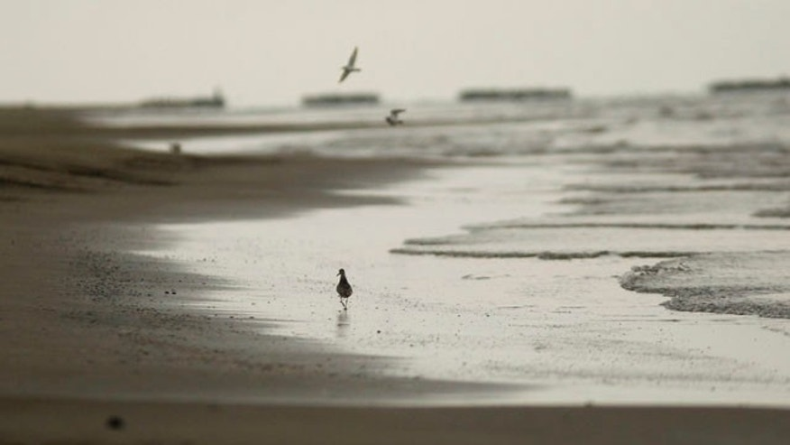 Aug. 9: Birds are seen on the empty shoreline after a rain storm in Grand Isle, La.