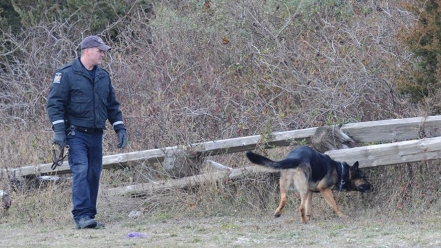 Dec. 16, 2010: A cadaver dog searches an area in Oak Beach on New York's Long Island while authorities continue to search a 10-mile stretch of beach where four bodies have been discovered.