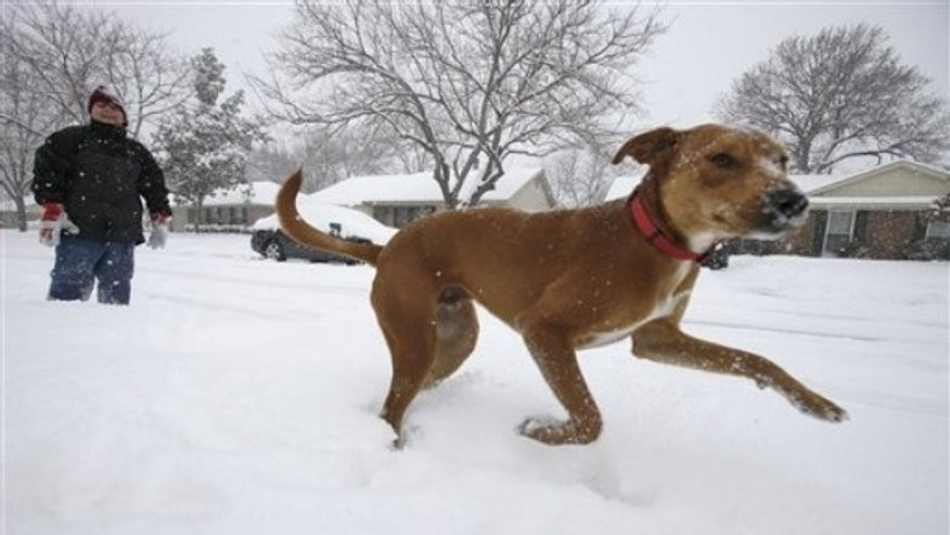 Under House Bill 998 Samual Huntsinger would need to get liability insurance in order to let his dog Scratch run through the snow covered streets of Richardson, Texas as he did Feb. 4, 2011.
