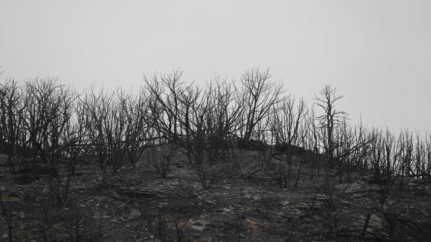 Trees are bare on a burned ridge west of Palo Pinto, Texas  as wildfires continue to burn west of Fort Worth, Wednesday, April 20, 2011.  Federal firefighters and officials from several U.S. agencies joined the fight against a massive wildfire burning 70 miles west of Fort Worth on Wednesday, the same day a Texas firefighter died from injuries suffered while battling a blaze earlier this month. (AP/Star-Telegram)