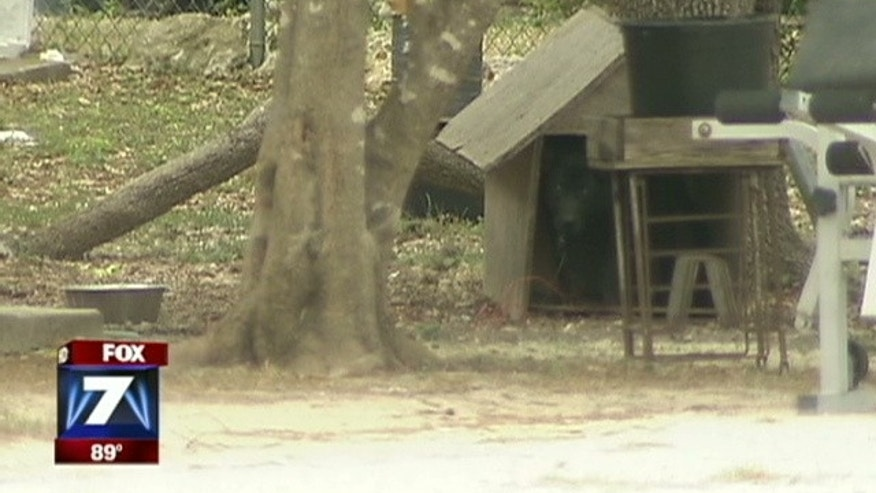 One woman called on city officials to ban chaining dogs outside homes in what she labeled abuse.