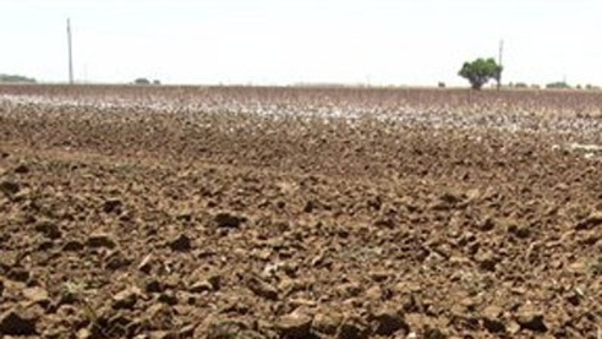 This May 19, 2011 file photo shows clumps of dirt in a drought-hardened field near Lubbock, Texas. The U.S. Department of Agriculture has dubbed all of Texas a natural disaster as the worst drought in decades persists across most of the state.