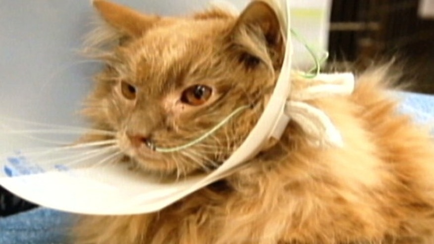 Jack -- who vanished Aug. 25 before a flight with his owner to San Francisco -- stunned airport workers when he fell through a ceiling tile at Terminal 8 in late October.