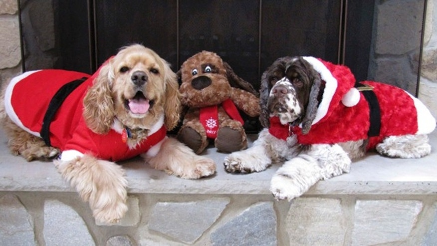 This November 2011 photo courtesy of Doreen Chilton shows Carol Bryant's dog, Dexter, right, and Chilton's dog, Bailey, left, in Forty Fort, Pa.