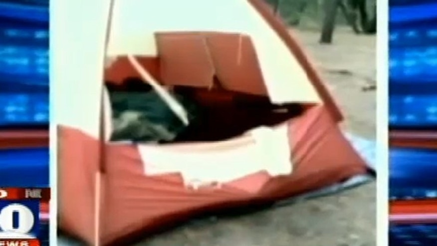 Before an Arizona bear mauled a camper, it paid a visit to another campsite, ripping a tent and confronting campers.