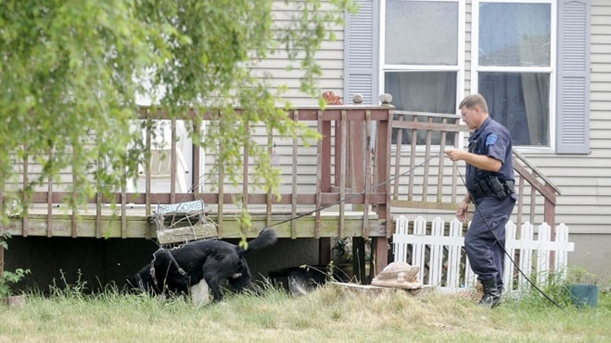 June 28, 2012: A Michigan State Police dog handler and his dog search the property at 7340 East Tomah Road in Mount Pleasant, Mich.