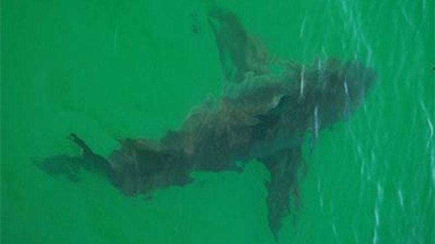 This photo taken by Cape Cod Shark Hunters reportedly is the first successful shark sighting of the 2012 season.