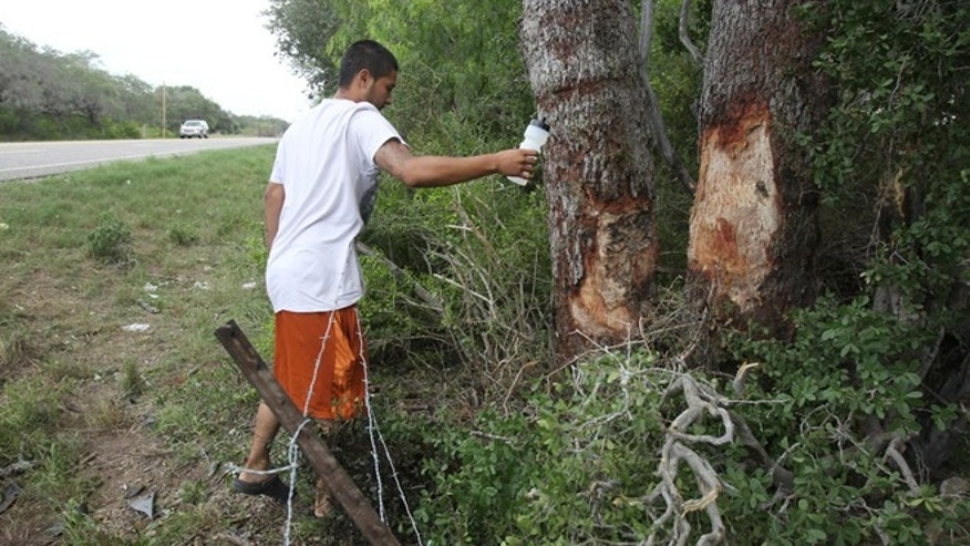 July 23: Jose Perez, a resident of nearby Berclair, Texas, sprinkles holy water where a truck crashed into a tree on the side of U.S. Highway 59 between Goliad and Beeville, Texas.