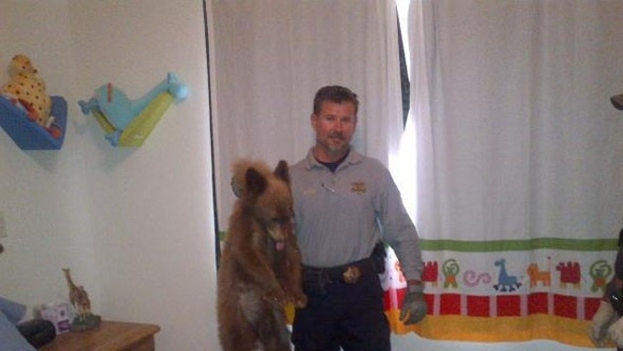 October 4, 2012 - Bear cub found in Sonoita, Arizona home.