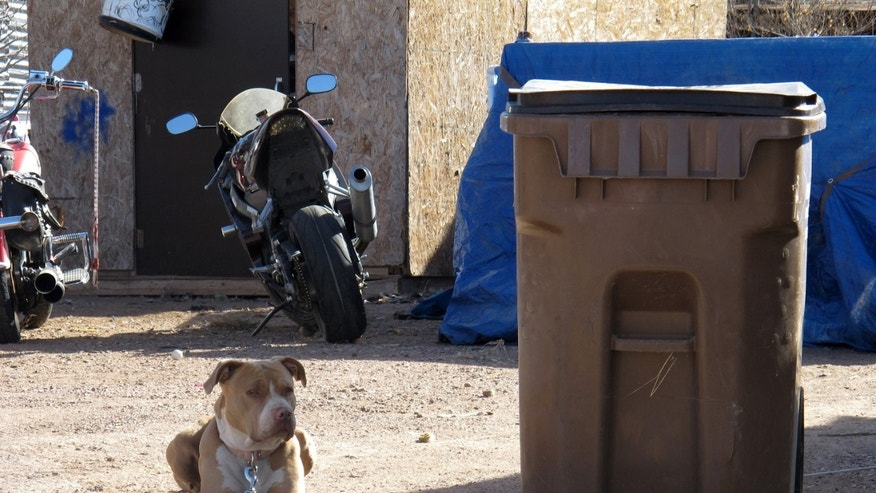 Nov. 29, 2012: One of two pit bulls tied up outside the mobile home where an alleged animal rescuer turned dog napper is accused of stealing two pit bulls.