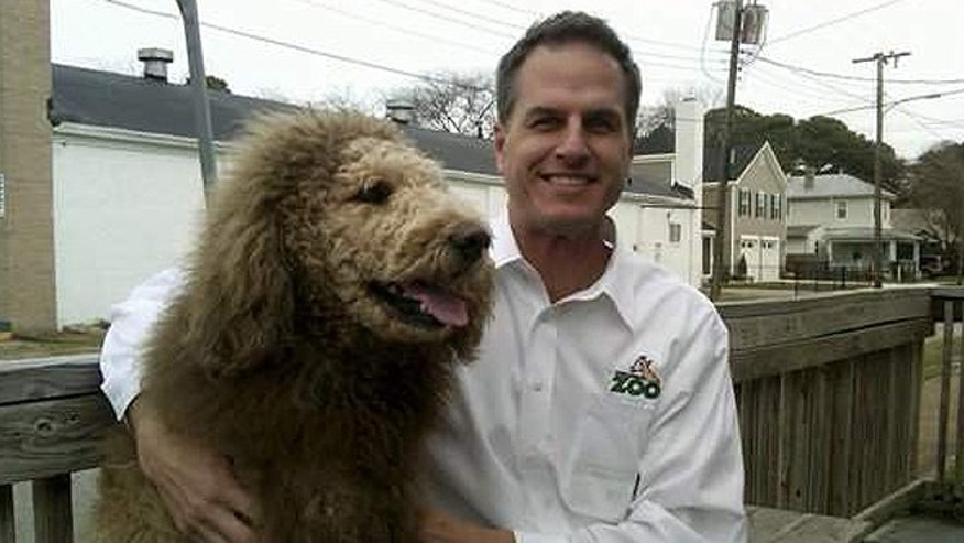 This undated photo provided by the Virginia Zoo shows the zoo's executive director Greg Brockheim with Charles the Monarch, a Labradoodle with a cut resembling the shaggy mane and tawny coat of a Lion, in Norfolk Va. A lion reported on the loose in Norfolk Tuesday, Jan. 8, 2013 was actually Charles, whose coif owner Daniel Painter says is intended to look like the mascot of Old Dominion University. (AP)