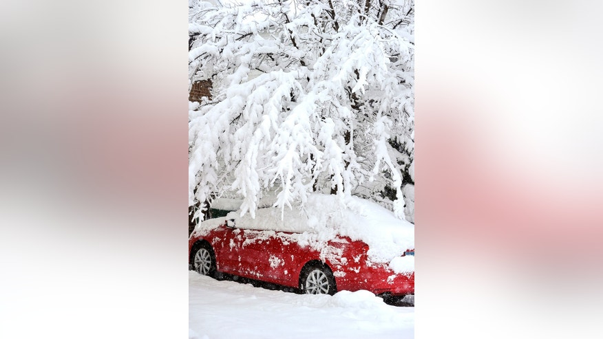 Snow-laden tree branches bend over a parked car Thursday, May 2, 2013 in Austin, Minn.  Winter made a return appearance in southeastern Minnesota where residents are digging out of more than a foot of new snow.  (AP Photo/Austin Daily Herald, Eric Johnson)