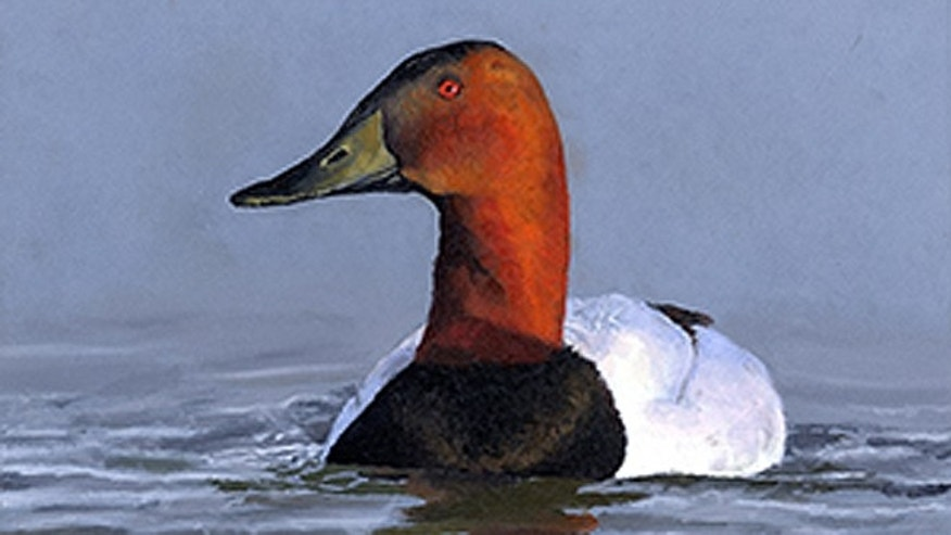 This canvasback duck painted by Madison Grimm, 6, of Burbank, S.D., has been reinstated as the winning entry in the 2013 Junior Duck Stamp Contest. Officials initially disqualified the painting, claiming it had been transferred in violation of contest rules. (FWS.gov)