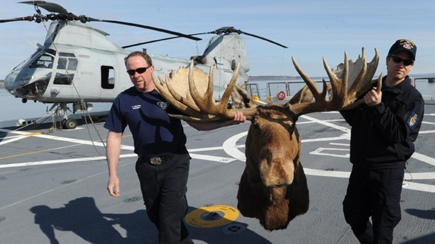 Lex Patten, left, carries a bull moose shoulder mount with a rack measuring 64.5 inches with the help of Cory Purcell, that he donated to the USS Anchorage on Monday, May 6, 2013 in Anchorage, Alaska.