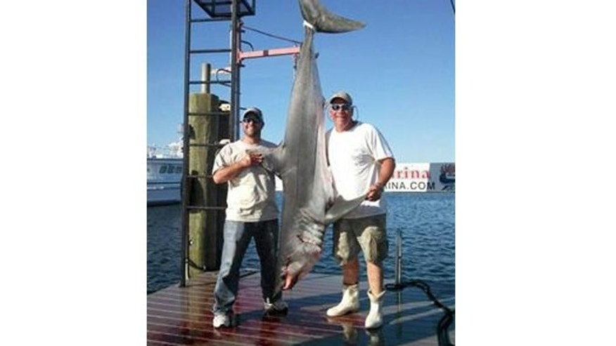 One fisherman told the Asbury Park Press that the shark was violently thrashing and eating broom sticks and speakers in the front of the boat.