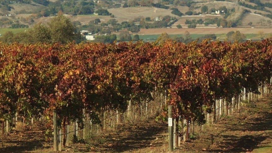 The valley, located in Santa Barbara County, is home to more than 100 vineyards. (AP)