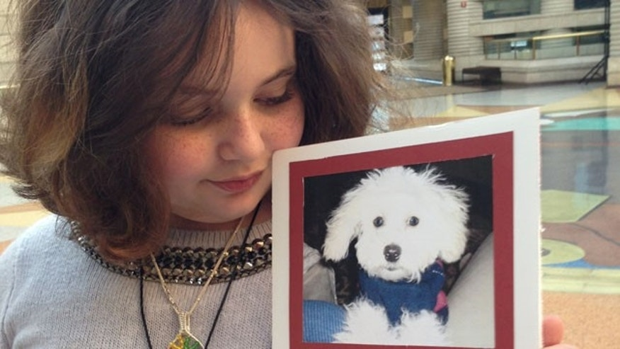 Hannah Wise, 10, of Farmington Hills decided to sue her mom's 54-year-old ex-boyfriend after she says he won't give her teacup poodle Mystery back.