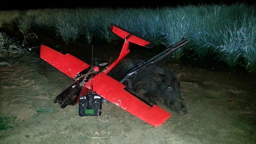 "This feral pig saw its demise at the hands of Cy Brown's so-called ""dehogaflier,"" an unmanned aircraft system used by Louisiana Hog Control since 2011 to hunt the porcine predators. (Courtesy: Cy Brown)"