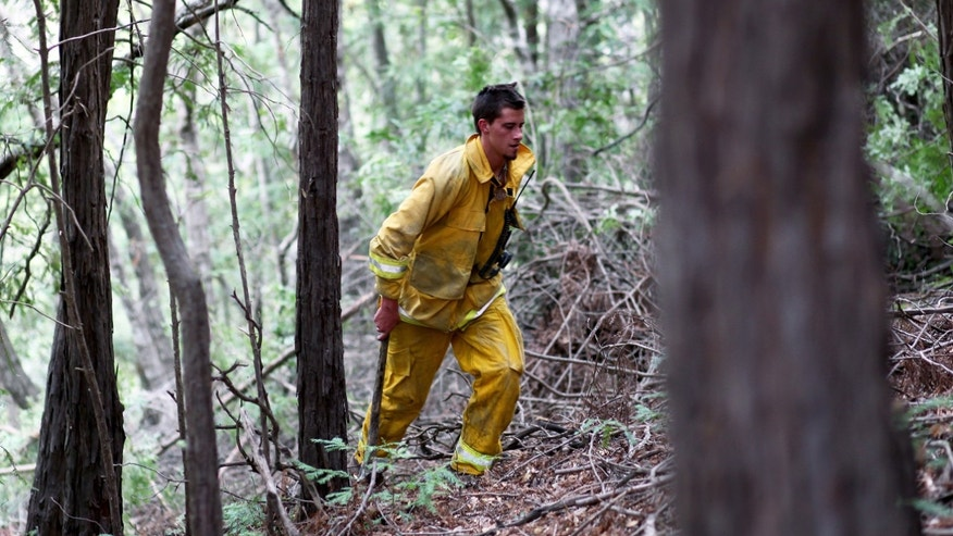 Lucas Handy of the Big Sur Volunteer Fire Brigade cuts trees and brush on Sycamore Canyon only a few miles from the Pfeiffer Ridge on Monday, Dec. 16, 2013, in Big Sur, Calif. The wildfire burning Monday in the Big Sur area of California destroyed at least 15 homes and forced about 100 people to evacuate as it chewed through dry vegetation on its way toward the ocean. (AP Photo/Nic Coury)
