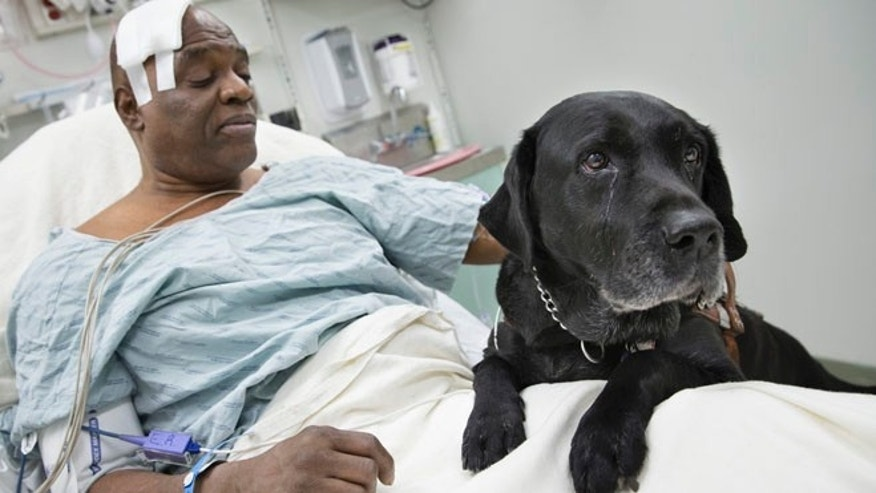 Dec. 17: Cecil Williams pets his guide dog Orlando in his hospital bed following a fall onto subway tracks from the platform at 145th Street in New York.