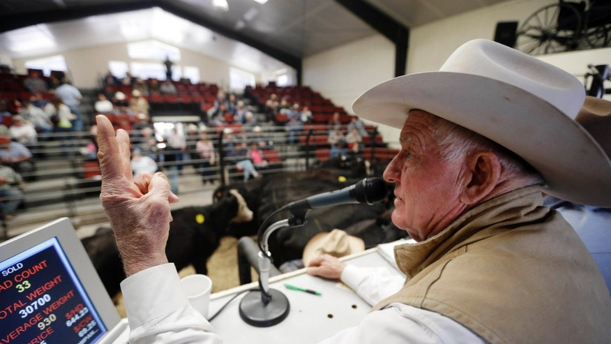 In this Tuesday Jan. 14, 2014 photo, Jim Warren, owner of 101 Livestock Market, conducts a cattle auction in Aromas, Calif. California's worsening drought is forcing many ranchers to sell their cattle and other livestock because their pastures are too dry to feed them and it's getting too expensive to buy hay and other supplemental feed. California only got a fraction of its normal rainfall last year, leaving reservoirs and groundwater levels at record lows and prompting many cities to cut water usage. (AP Photo/Marcio Jose Sanchez)