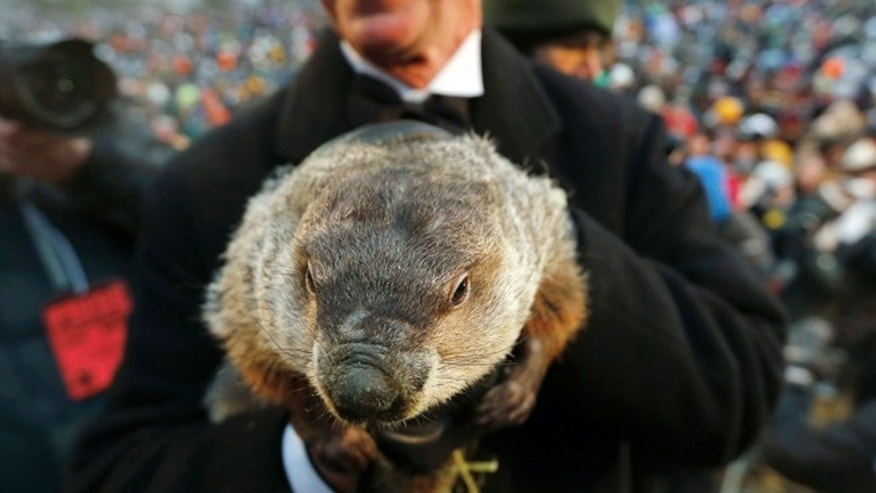 Feb. 2, 2013: In this file photo, Groundhog Club co-handler Ron Ploucha holds the weather predicting groundhog, Punxsutawney Phil in Punxsutawney, Pa.