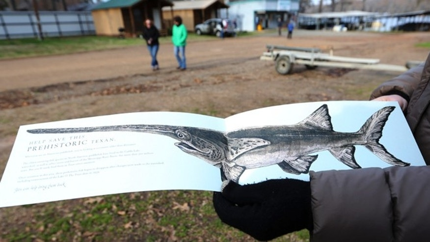 Feb. 26: A drawing of a paddle fish is displayed after a tour of Caddo Lake in Uncertain, Texas.