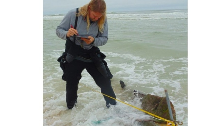 Jan. 2, 2014: An archaeologist from the St. Augustine Lighthouse & Museum investigates a shipreck submerged in the Ponte Vedra Beach, Fla., shoreline.