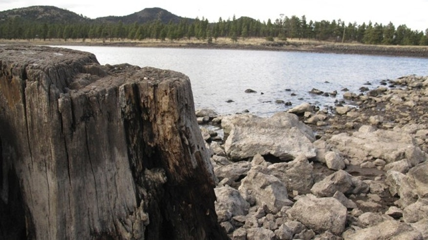 April 11, 2014: In this photo, low reservoir levels reveal tree stumps and a cracked lake bed in Williams, Ariz. Officials in Williams have declared a water crisis amid a drought that is quickly drying up nearby reservoirs and forcing the community to pump its only two wells to capacity.