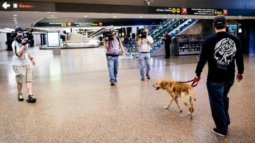 Surrounded by media, Sergeant Deano Miller leads military working dog Thor, a yellow Labrador with whom Deano served with in Afghanistan, out of Seattle-Tacoma International Airport Thursday, May 22, 2014, in SeaTac, Wash. Thor was adopted by Cpl. Miller, ensuring his retirement in the U.S. and his reintegration into a home after a lifetime of service to his country. (AP Photo/seattlepi.com, Jordan Stead)