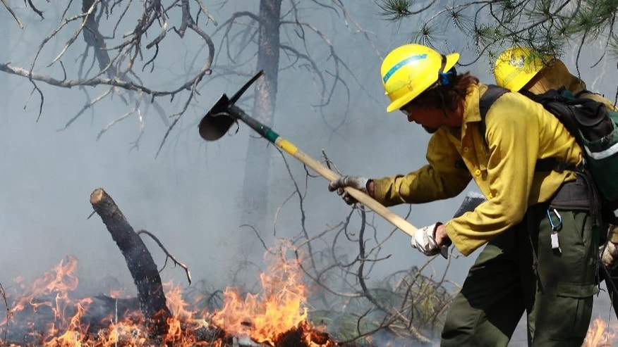 FILE - This June 2013 file photo shows a firefighter working the fire line on the Black Forest wildfire north of Colorado Springs, Colo. Sheriff Terry Maketa is set to release an after-action report on the Black Forest Fire Tuesday morning, June 10, 2014,. The fire started a year ago this week. It destroyed nearly 500 houses and killed two people north of Colorado Springs. (AP Photo/Brennan Linsley, FILE)