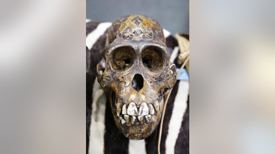 A carved orangutan's skull is displayed at a news conference at JFK international Airport, Monday, June 16, 2014 in New York  to highlight efforts by U.S. Customs and Border Protection and U.S. Fish and Wildlife to deter illegal trafficking in wildlife. The items displayed were seized from baggage and cargo arriving at the airport.  The government is cracking down on the illegal trafficking, saying some of its import-export activity may be linked to terrorists. (AP Photo/Mark Lennihan)