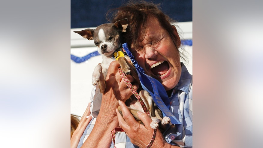 "FILE - In this Friday, June 25, 2010 file photo, Kathleen Francis, of Clearlake, Calif., clutches her purebred Chihuahua ""Princess Abby"" after winning the World's Ugliest Dog Contest, in Petaluma, Calif. The 25th running of the World's Ugliest Dog contest takes place Friday, June 20, 2014, at the Sonoma County Fair in Petaluma, Calif. (AP Photo/Ben Margot)"