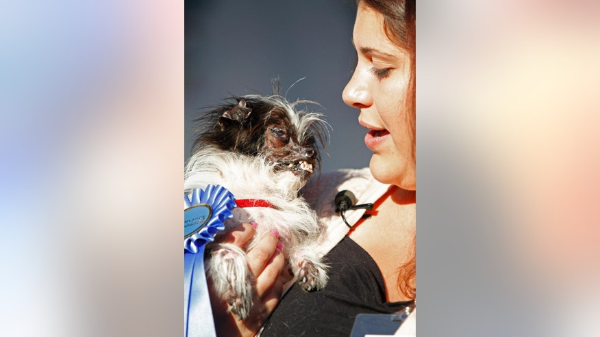 Peanut, a two-year-old mutt is held by Holly Chandler after winning the World's Ugliest Dog Contest, at the Sonoma-Marin Fair, Friday, June 20, 2014, in Petaluma, Calif. Chandler and Peanut are from North Carolina. (AP Photo/George Nikitin)