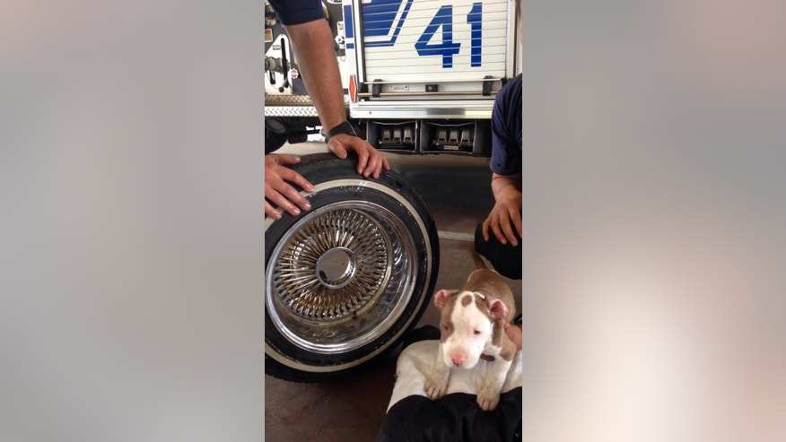 In this photo released by the Kern County Fire Department, a puppy named Junior that somehow got his head stuck in the middle of a wheel rim and was brought to a Kern County fire station, is held next to the wheel after he was freed on Friday, June 20, 2014. Fire Department spokesman Brandon Hill says two firefighters used vegetable oil to ease the dog's head out of the hole. The little pooch has returned to live with its owner and seven siblings. (AP Photo/James C. Dowell )
