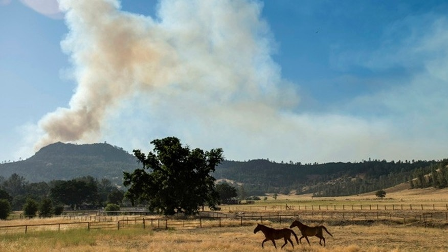 July 3, 2014: Horses cross a pasture as the Butts fire burns above Snell Valley, California. (Reuters)