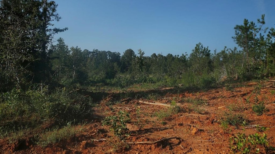 A dirt filled area near the crime scene found on Wednesday, Sept. 10, 2014, in Camden, Ala. Authorities expect to charge a South Carolina man, 32-year-old Timothy Ray Jones Jr., in connection with the deaths of his five children after he led them to the secluded dirt road in Alabama where their bodies lay wrapped in individual garbage bags. Wilcox County, Alabama, District Attorney Michael Jackson said the father is suspected of killing the five children in South Carolina and dumping the bodies in Alabama.(AP Photo/Brynn Anderson)