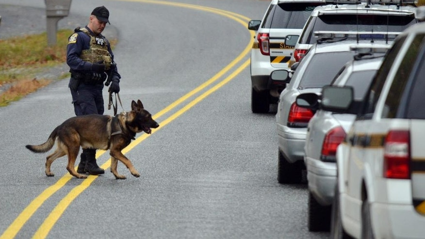 A K9 unit searches an area in Price Townhsip Pa., Saturday, Oct. 11, 2014, looking for Eric Frein the suspect in last month's deadly ambush at a state police barracks. (AP Photo/The Times-Tribune, Jason Farmer)
