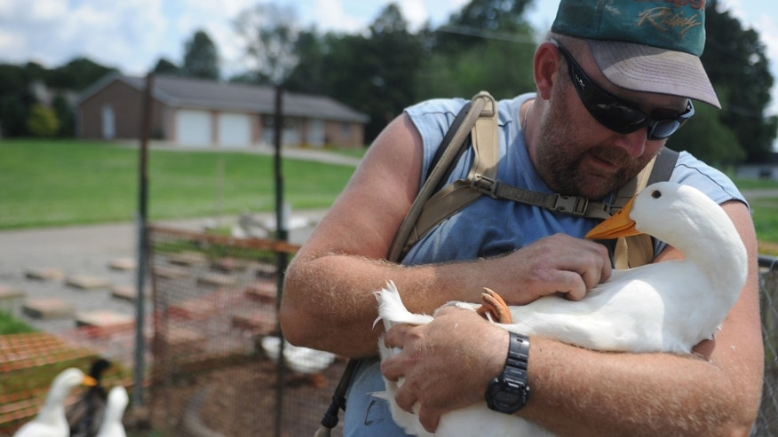 July 10, 2014: Iraq war veteran Darin Welker, 36, holds one of his ducks at his home in West Lafayette, Ohio.