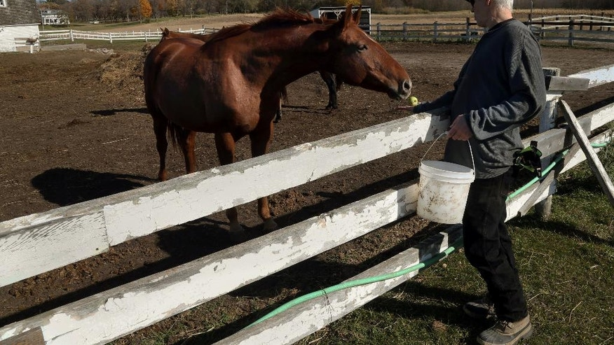 In this Oct. 16, 2014 photo, Randy Johnson offers an apple to a horse at Eagle's Healing Nest, a retreat for veterans, in Sauk Centre, Minn. The retreat, located on 124 acres of rolling farmland, has served the needs of veterans from about 10 states. The goal is to mend and go home. (AP Photo/Jim Mone)