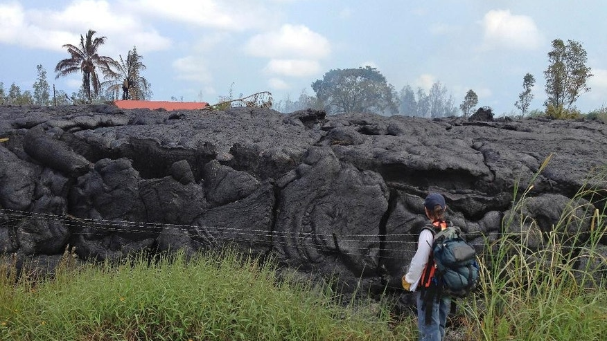 In this photo taken Tuesday, Nov. 11, 2014, and provided by the U.S. Geological Survey, a geologist examines the margin of a lobe of lava from the Kilauae Volcano that began on June 27 that has inflated significantly after destroying a residence Monday in Pahoa, Hawaii. A barbed wire fence was surrounded and tilted towards the camera as the flow inflated, so that the fence is now nearly horizontal. The red roof in the background is the garage structure near the house that burned on Monday. The garage was still standing as of noon on Tuesday. (AP Photo/U.S. Geological Survey)