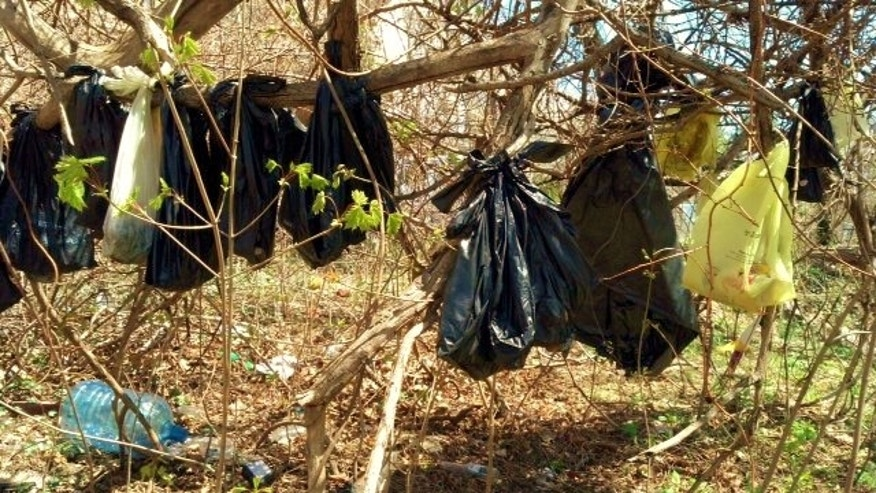 "FILE - In this April 24, 2014 file photo provided by the SPCA of Westchester's Humane Law Enforcement Division, plastic bags containing the remains of about 25 cats are hang from a tree in a wooded area in Yonkers, N.Y. The SPCA of Westchester said Tuesday, Nov. 18, 2014 that Rene Carcamo of Yonkers has been charged with illegally disposing of the dead cats, though he is not charged with killing them. The SPCA group's director of enforcement says the disposal crime is what investigators feel they are ""able to prove.""(AP Photo/SPCA of Westchester's Humane Law Enforcement Division, File)"
