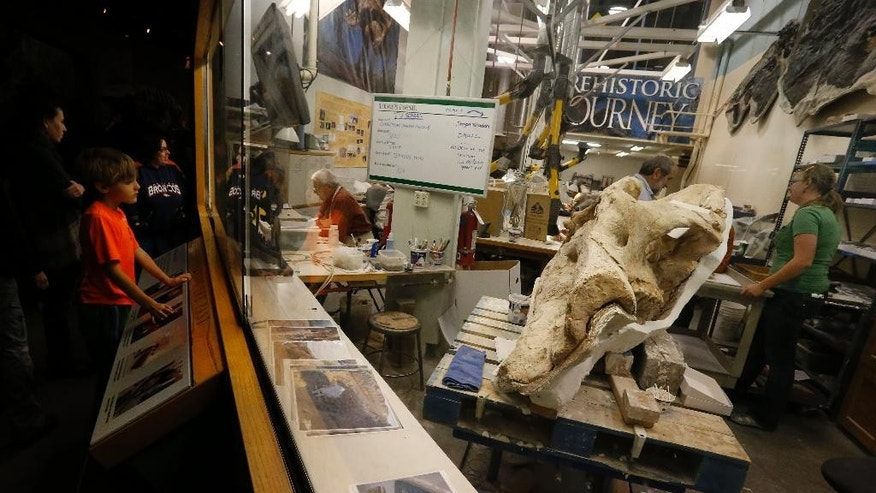 In this Nov. 25, 2014 photo, museum visitors view scientists and technicians working on bones near the scull of an ancient mastodon, part of an extensive discovery, inside a workroom at the Denver Museum of Nature and Science. A trove of ancient bones from gigantic animals discovered in the Colorado mountains provides a fascinating look at what happened about 120,000 years ago when the Earth got as warm as it is today, scientists say. (AP Photo/Brennan Linsley)