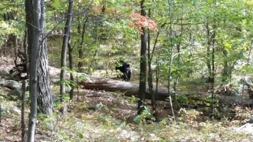 Darsh Patel was walking with four friends through the Apshawa Preserve in West Milford in September when the black bear attacked. The 22-year-old student became the first person to be killed by a bear in New Jersey. (West Milford Police Department)
