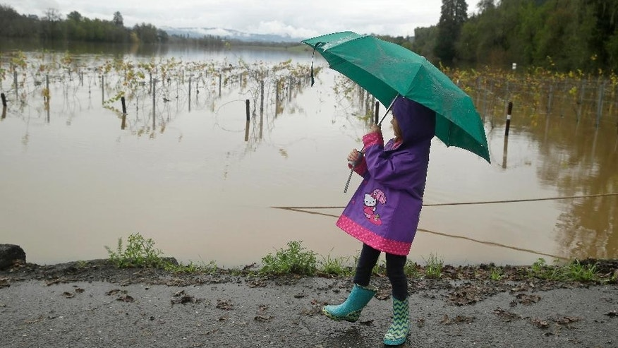 Madison Gardner, 4, looks out at a flooded vineyard on Wohler Road Friday, Dec. 12, 2014, in Forestville, Calif. While the sun rose Friday in a dry San Francisco sky, the storm's affects lingered in Northern California. In Sonoma County, the Russian River was approaching flood stage and was expected to crest several feet above it by early afternoon. Officials advised residents of about 300 homes to evacuate low-lying areas. (AP Photo/Eric Risberg)