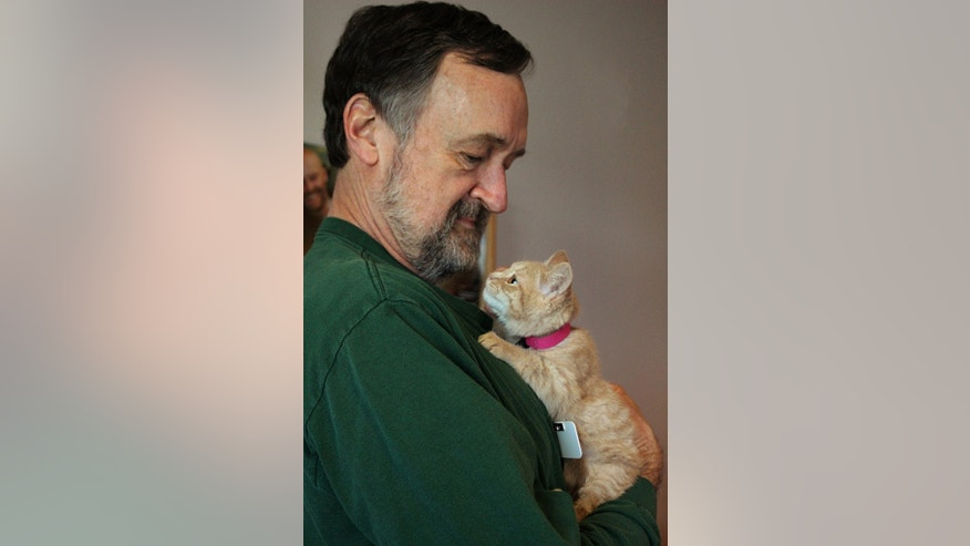 """In this Dec. 9, 2014 photo, made available by The Denver Dumb Friends League, DDFL, a rescued kitten named Elsa is held by Jim Slater, DDFL Volunteer of the Year, following a surgery at the Dumb Friends League in Denver, Colo. The story of the kitten found in sub-zero weather in Denver and named after Elsa from """"Frozen"""" has a happy ending. Elsa has been adopted by Slater, the volunteer who helped nurse her back to health. (AP Photo/Dumb Friends League)"""