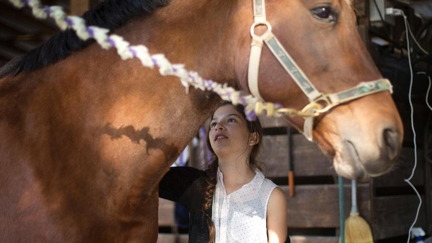 "Ava Exelbirt brushes one of the remaining horses at Masterpiece Equestrian Center in Davie, Fla., Tuesday, Dec. 16 2014. There's nothing that can be done to save 18 poisoned horses at the equestrian center, so their young riders are holding ""spa days"" to brush their manes and tails, paint their hooves, feed them hay and pet their noses to keep the animals comfortable in their last days. Four horses at Masterpiece Equestrian Center have died since October because of contaminated feed, and the owners of the rest are struggling to accept the approaching deaths of the others. (AP Photo/J Pat Carter)"