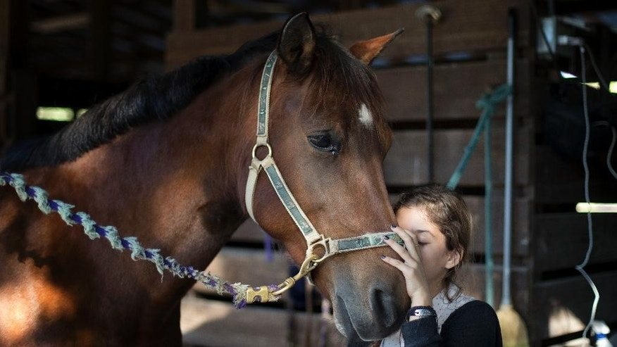 FILE- In this Dec. 16, 2014 file photo, Ava Exelbirt hugs one of the remaining horses at the Masterpiece Equestrian Center in Davie, Fla., Tuesday, Dec. 16, 2014. Ava lost the horse she rode to poisoned feed. The Masterpiece Equestrian Center, where 22 horses were poisoned by tainted feed, has reached a settlement with the company that produced and sold the feed. Andy Yaffa, the attorney representing the equestrian center and the owners of 20 of the horses said Monday, Dec. 29, 2014, that the terms of the settlement are confidential, but his clients will be able to care for their ailing horses and purchase new horses. (AP Photo/J Pat Carter, File)