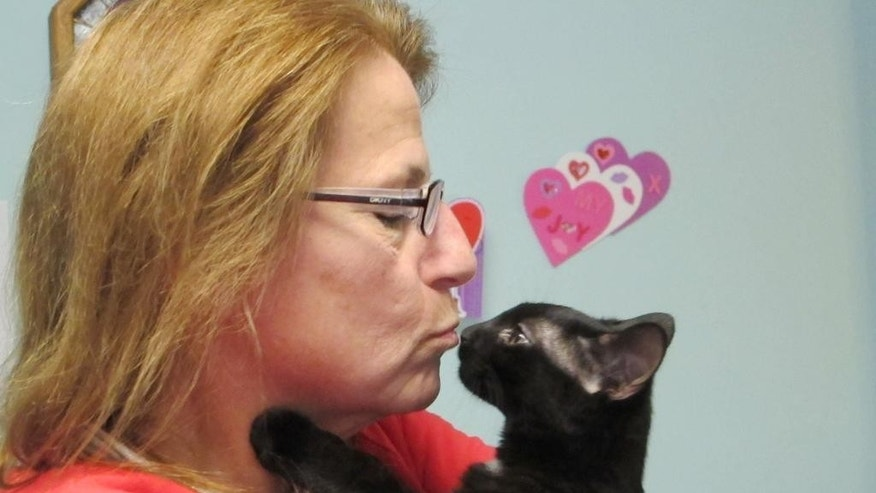 Debbie Grondin kisses Peyton, a black cat, in her Lacey Township N.J. home on Thursday Feb. 12, 2015. Grondin is taking care of Peyton until the cat can be adopted, but the founder of a cat rescue facility that placed her with Grondin says black cats are the hardest to place for adoption due to some people's superstition.  (AP Photo/Wayne Parry)